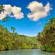 Tropical river - Stock Photo