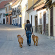 Womwith dogs on walk — Stock Photo #8293584