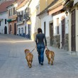 Woman with dogs on a walk — Stock Photo