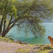 Dog at the lake — Stock Photo
