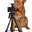Photographer dog with camera — Stock Photo #8296975