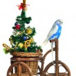 Budgerigar carrying new year tree on the tricycle — Stock Photo