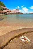 Seashells on the exotic beach — Stock Photo
