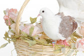 Dove on a basket — Stock Photo