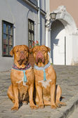 Dogs on a sidewalk — Stock Photo