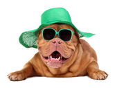 Dog wearing green straw hat and sun glasses — Stock Photo