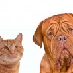 kahverengi kedi ve köpek yakın çekim portre — Stok fotoğraf