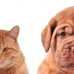 kedi ve köpek - namlu yarısı kadar Portreler izole kapatmak — Stok fotoğraf