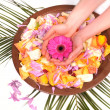 Woman Hands Spa with flower petals and natural ingredients - manicure conce — Stock Photo #8334762
