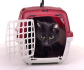 Cat looking out cautiously of its travelling cage — Stock Photo