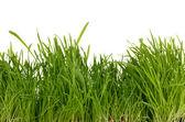 Erba verde fresca — Foto Stock