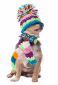Blind (can't see), shut eyes concept. Puppy Dressed For Cold Weather I — Stock Photo