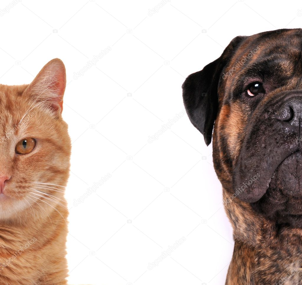 Cat and Dog - half of muzzle close up portraits isolated on white — Foto Stock #8334544