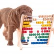 Smart sharpei puppy is learning how to count — Stock Photo