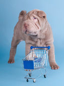 Adorable sharpei puppy with empty shopping cart — Stock Photo