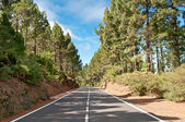Road in coniferous forest, Spain — Stock Photo