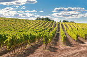 Vineyard and hills, Spain — Stock Photo