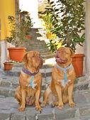 Psi na ulici — Stock fotografie
