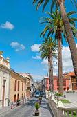 夏の通り、オウム、テネリフェ島、スペイン — ストック写真