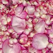 Pink rose petals — Stock Photo #8700582