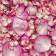 Pink rose petals — Stock Photo