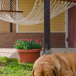 Garden house, hammock and sleeping dog — Stock Photo