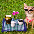 Little dog wearing pink t-shirt relaxing in meadow picnic — Stock Photo