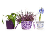 Three flower pots - Lavender, Hyacinth and Cattleya Orchid — Stock Photo