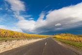 Road through vineyard landscape — Stock Photo