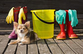 Small dog lying near items for cleaning and rubber boots — Stock Photo