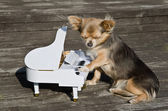 Small dog is playing on a toy piano on sunny stage — Stock Photo