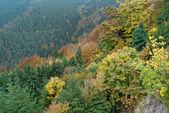 Heldere kleurrijke herfst bos — Stockfoto
