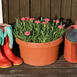 Garden tools - flower pot, watering can - Stock Photo
