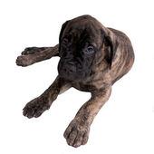 Sad dog — Stock Photo