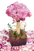 Pink roses and petals — Stock Photo