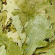 Oak leaves — Stock Photo #9077495