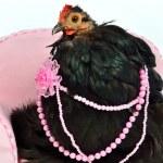 Glamorous chicken of Cochin China breed — Stock Photo #9183697