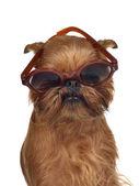 Zabawny pies w okularach — Zdjęcie stockowe