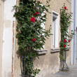Roses bush near traditional house, Germany — Stock Photo