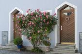 Bush of roses near old house, Germany — Stock Photo