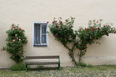 Roses, window and bench, Germany — Stock Photo