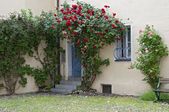 Old town door with rose bushes, Germany — Stock Photo