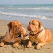 Two relaxed dogs lying at the beach — Stock Photo