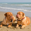 Stock Photo: Two relaxed dogs lying at the beach