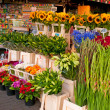 Flower market at the city center — Stock Photo