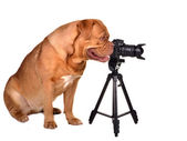 Photographer with photo camera — Stock Photo