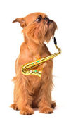 Dog with Saxophone — Stock Photo