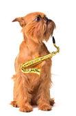 Dog with Saxophone — Stock Photo