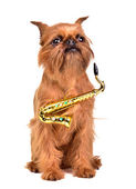 Saxophonist dog — Stock Photo