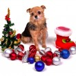 Christmas puppy with colorful decorations — Stock Photo